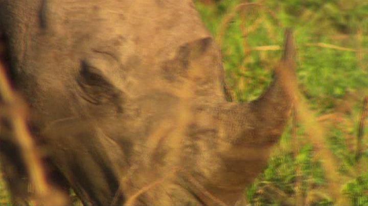 Sudafrica: la strage di rinoceronti ha raggiunto un nuovo ...
