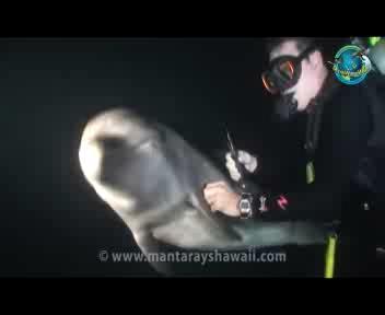 Il delfino cerca aiuto, lo cura il sub