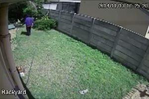 Ladro fifone, un cucciolo lo insegue e lui scappa ...