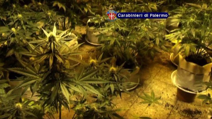 Palermo, ex convento trasformato in serra per marijuana     ...