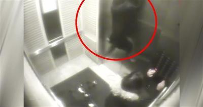 Panico in ascensore: il guinzaglio del cane si incastra     ...