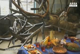 Thanksgiving 'anticipato' per i lemuri