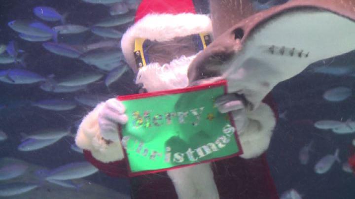Babbo Natale ospite speciale dell'acquario di Tokyo - Nude ...