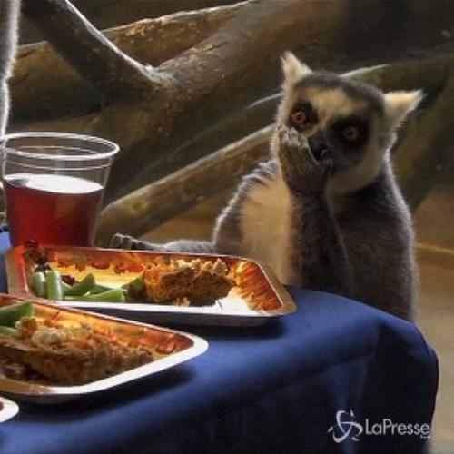 Anche i lemuri festeggiano il Giorno del ringraziamento     ...