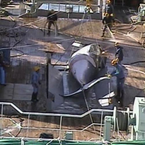 Giappone, nuovo piano caccia alle balene: esteso uso metodi ...