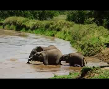 L'elefantino salvato dal 'gruppo'