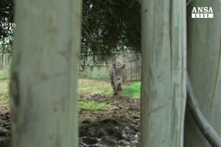 Solo 5 rinoceronti bianchi rimasti al mondo