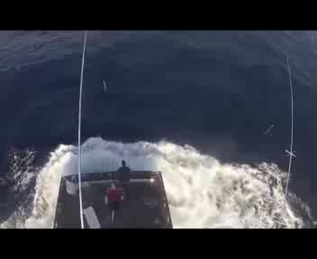 Pesce da oltre 270 kg assalta una barca
