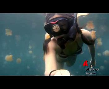 Nuotare tra milioni di meduse