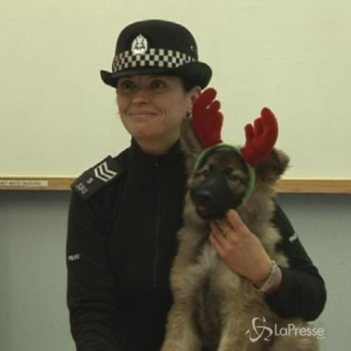 Adottato dalla polizia scozzese: il cucciolo verso una ...