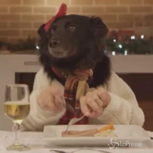 La cena più improbabile del Natale: 13 cani e un catto, ...