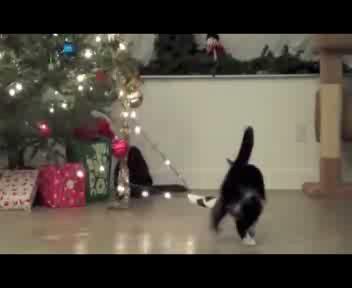 E' 'guerra' tra il gatto e l'albero di Natale