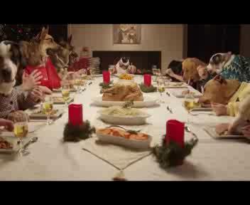 13 cani e 1 gatto, cena di Natale 'bestiale'
