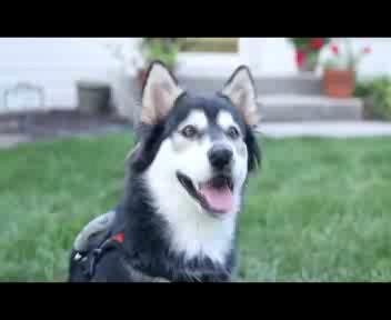 Usa, il cane Derby può correre con le protesi stampate in ...