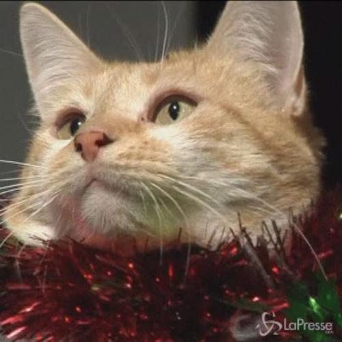 Un classico del Natale, 'White Christmas', cantato dai ...