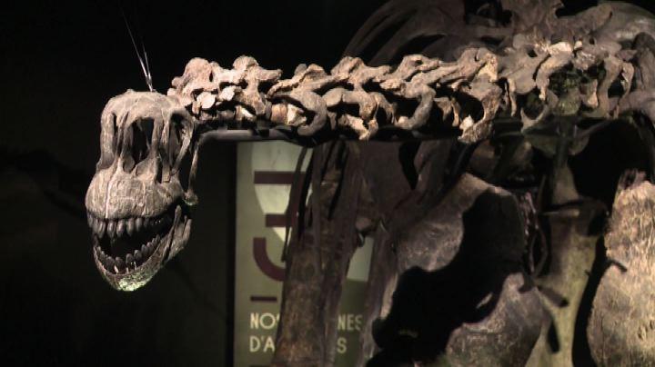 A Lione apre il nuovo Museo della confluenza tra Rodano e ...