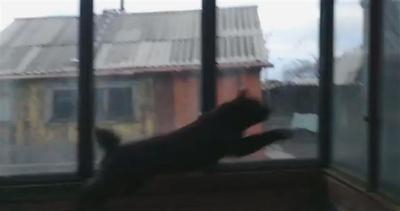 Gatto scalmanato in preda alla furia