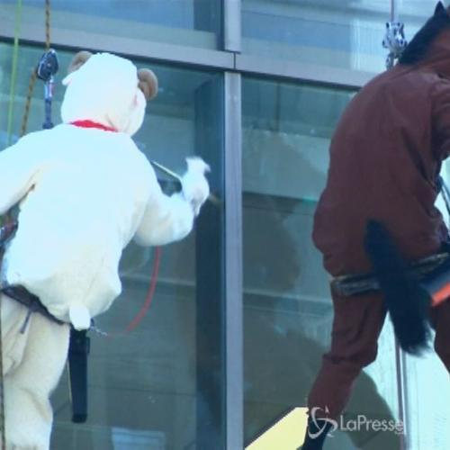 Un cavallo e una pecora che puliscono i vetri di ...
