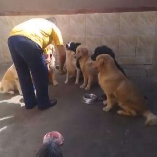 I cani più pazienti del mondo: si buttano sulla ciotola ...