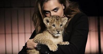 Cara Delevingne accusata dalla protezione animali