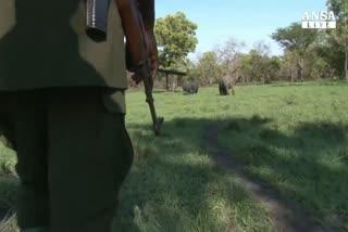 Uganda 'schiera' droni in difesa elefanti