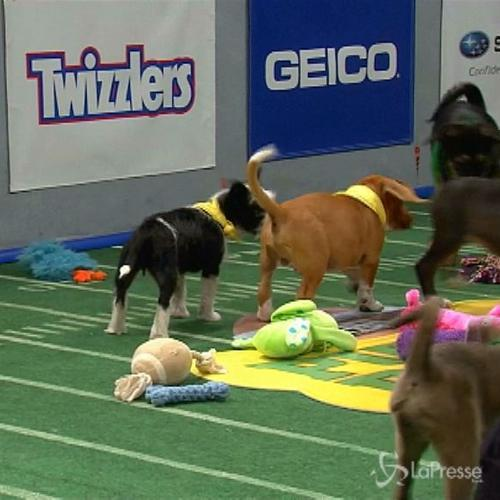 Presto in tv in America l'11esimo Puppy Bowl, il Super ...