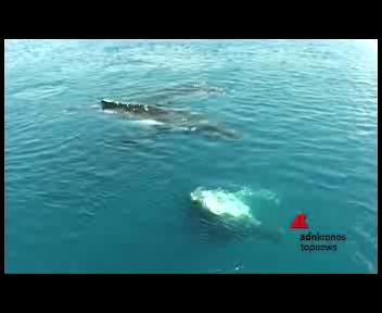 Ecco la voce delle Balene