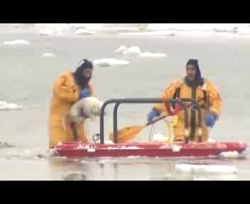 I due cani 'amici' intrappolati nei ghiacci