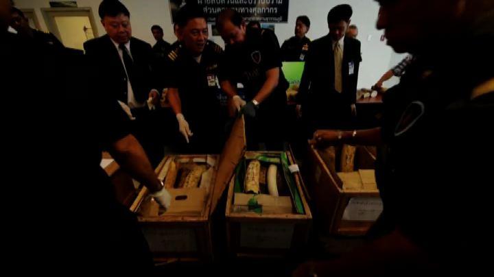 Cina vieta l'importazione dell'avorio lavorato