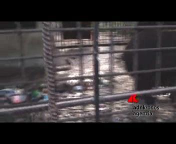 Gli orsi alcolisti di Sochi bloccati dalla burocrazia