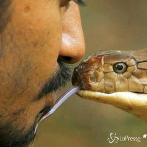 L'uomo che incanta i serpenti bacia un cobra reale