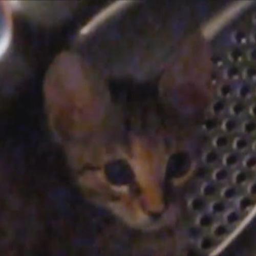 Il gatto che si crede criceto: corre dentro cestello della ...