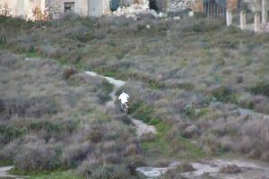 Moto da cross dentro l'area protetta di Molentargius, la ...