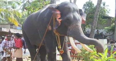 India, corsa tra elefanti per inaugurare un festival