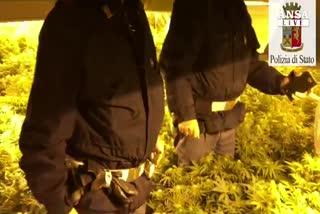 Piantagione marijuana in magazzino