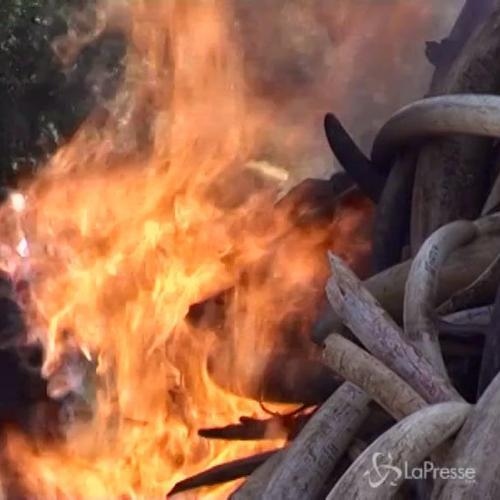 Falò con 15 tonnellate di zanne di elefante in Kenya ...