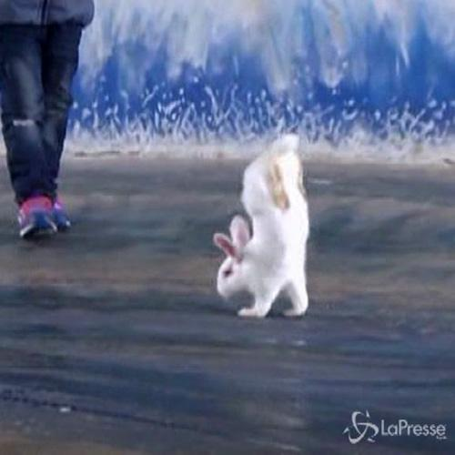 Cina, coniglio bianco star dello zoo: sta in verticale come ...