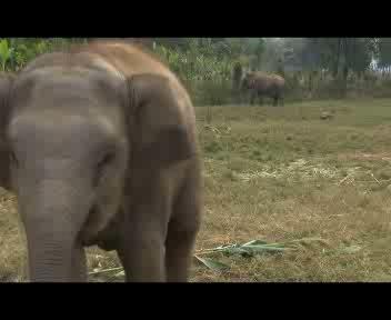 Quando l'elefantino non molla