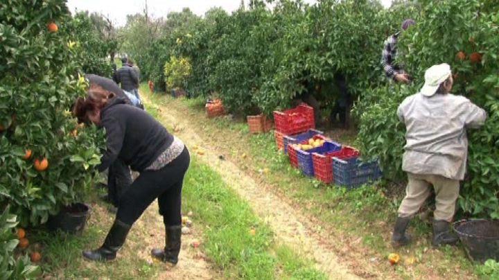8 Marzo, una impresa agricola su 3 è guidata da una donna  ...