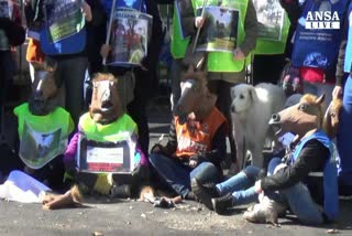 Animalisti, stop alle 'botticelle' a Roma