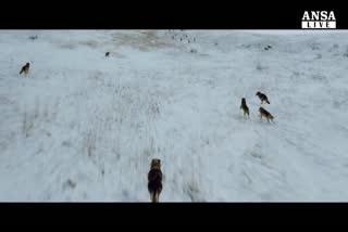 Torna Annaud e celebra 'L'ultimo lupo