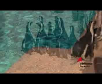 Due pinguini sudafricani per lo Zoomarine