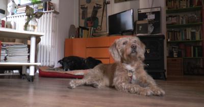 DogBuddy, servizio d'accoglienza su misura e condiviso per ...