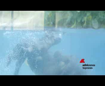Carezze tra mamma ippopotamo e il suo piccolo