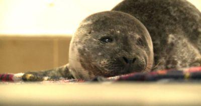 Global warming: i leoni marini della California sono in ...