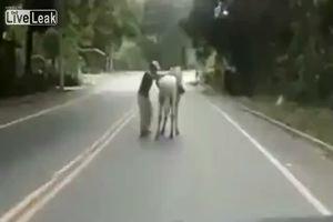 Mai guidare da sbronzi, anche salire in sella ad un cavallo ...