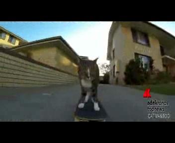 Didga, il gatto che va 'matto' per lo skate