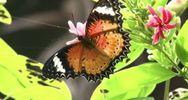 Cambogia, il più grande centro di farfalle del sud est ...