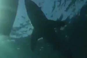 Squalo bianco attacca il gommone di una troupe televisiva