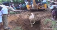 India, cucciolo di elefante intrappolato in un fosso: lo ...